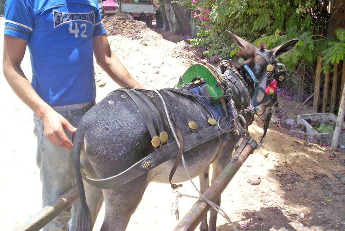 Donkeys - Society for the Protection of Animal Rights in Egypt
